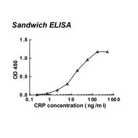 Rabbit anti-human C-reactive protein (CRP) monoclonal antibody (clone 56C1)