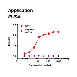 Rabbit anti-human Fatty acid binding protein 3 (FABP3) monoclonal antibody clone 3A11