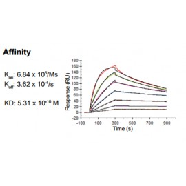 Rabbit anti-human Chemokine (C-C motif) ligand 18 (CCL18) monoclonal antibody, clone 12B9